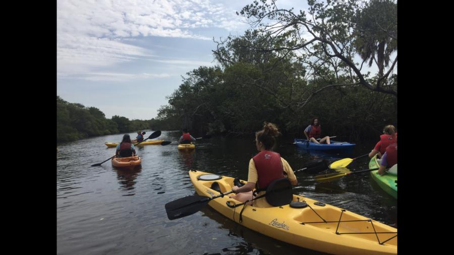 AP Enviroment explore the mangroves