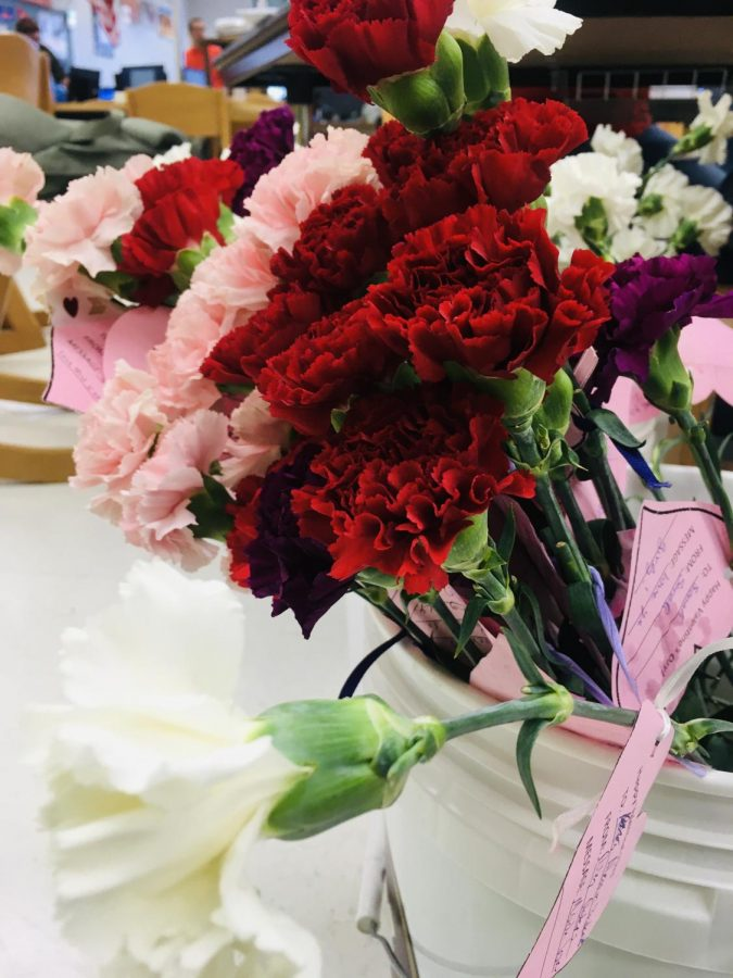 Valentine's Day carnation sales